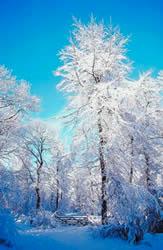 Winterpracht In de Alpenregio Bludenz